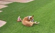 Artificial Grass for Your Pooch