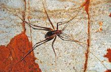 rid Cave Crickets